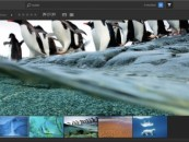 Adobe accidentally releases its cloud based photo editor, Nimbus
