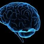 IBM AI schizophrenia